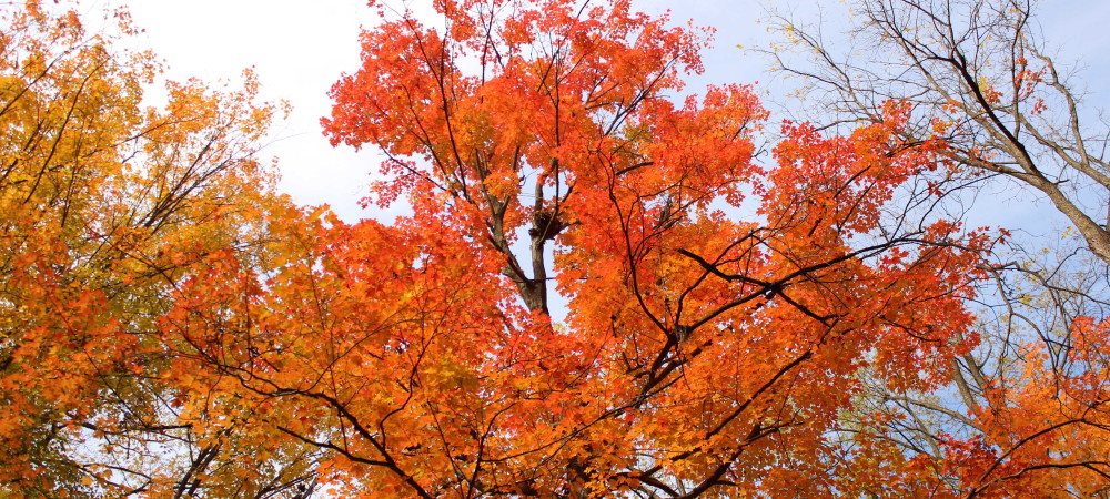 DEVILS_PUNCHBOWL_AUTUMN_TREE (compressed)