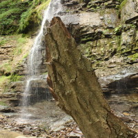 TIFFANY_FALLS_STANDING_BARK (compressed)