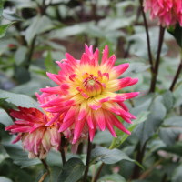 FLOWER_CLOSEUP